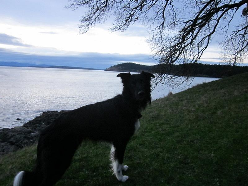 Pet Friendly San Juan Islands